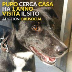Pupo cerca casa! . . #Milano #cane #cani #adozione #italia #dog #dogs #love #life #bausocial