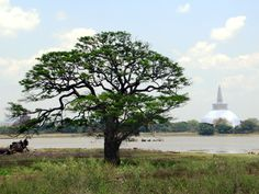 The Ruvanvelisaya Dagoba is visible across Thissa Wewa Lake at Anuradhapura, Sri Lanka. Sri Lanka, Cities, City