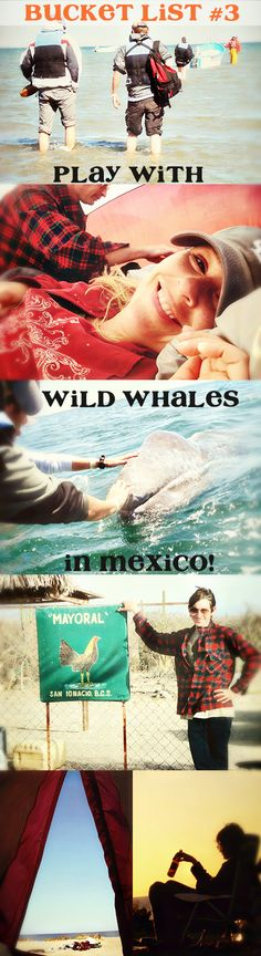 Playing With Whales in Baja >>> It's so fun you camp on the beach and then you take a tiny boat out. You can actually pet the whales when they come up to your boat. It is OUT OF THIS WORLD! You can even kiss them - they are so friendly and curious. Add it to your bucket list!