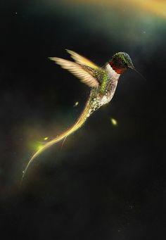 Verlichte kolibrie - a State of Mind Pretty Birds, Love Birds, Beautiful Birds, Animals Beautiful, Cute Animals, Beautiful Things, Beautiful Pictures, Hummingbird Art, Form Design