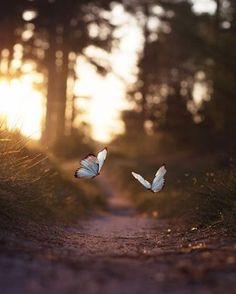 """""""Kimi düşlerin kıyısında parlayan o uçucu kaçıcı aydınlık, uyandığımızda zihnimizden silinmeye başlamış olan o aydınlık. Onu bulmak umuduyla kalkarız yatağımızdan, belki de bugün, her şeyin, akla gelebilecek her şeyin olabileceği bu yepyeni günde bulmayı umarız."""" Michael Cunningham  http://turkrazzi.com/ipost/1517086995833218735/?code=BUNxpW4AOav"""