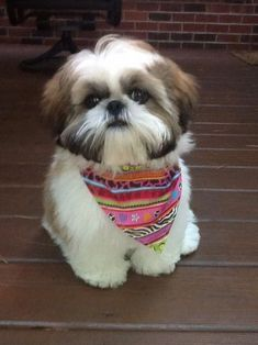 """Check out our web site for additional relevant information on """"shih tzu puppies"""". It is actually an outstanding place for more information. Shih Tzu Hund, Perro Shih Tzu, Shih Tzu Puppy, Shih Tzus, Shitzu Puppies, Cute Dogs And Puppies, I Love Dogs, Doggies, Puppys"""