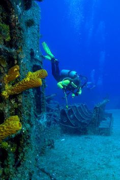Spectacular Dive Sites You Have to See to Believe Scuba Diving in Fort Lauderdale: A Wreck Lover's Dream! - www.scuba-blog.co...