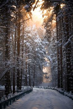 """""""Snow road"""" Novosibirsk,Russia, by Terroplis A."""