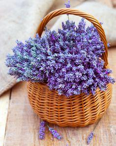 Bir sonraki indirimimiz hangi ürünümüzde olsun istersiniz? :) Lavender Cottage, Lavender Blue, Lavender Fields, Lavender Flowers, Lilac, Lavender Crafts, Plantas Bonsai, Lavander, Flower Basket