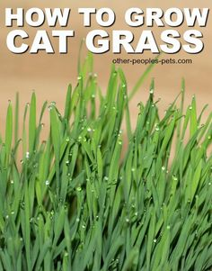 how to make grass grow on dirt