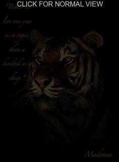 tiger-quotes-6.jpg (440×599)