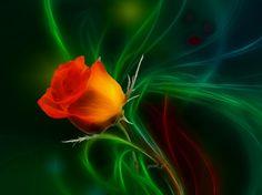 Orange rose - Other Wallpaper ID 1109839 - Desktop Nexus Abstract