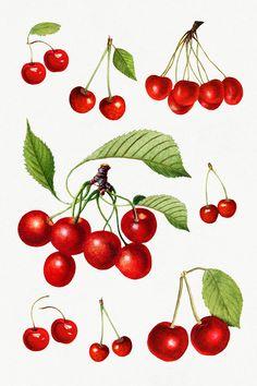 Cherry Drawing, Cat Drawing Tutorial, Wreath Watercolor, Free Illustrations, Flower Wallpaper, Art Sketchbook, Botanical Art, Aesthetic Art, Pattern Art