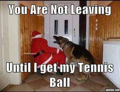 #German #Shepherd #Christmas