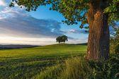 Gruppe von Bäumen auf einem Hügel — Stockfoto