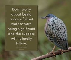 Do you agree with this? Chamber Of Commerce, Oprah Winfrey, No Worries, Success, World, Nature, Free, The World, Naturaleza