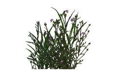 Plant (15) by wolverine041269.deviantart.com on @DeviantArt