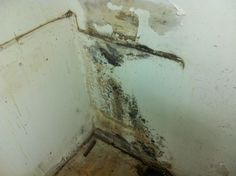 Mold In Bathroom Landlord Responsibility how does steam cause mold in your bathroom? | shower mold and grout