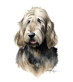 OTTERHOUND Dog Watercolor Painting ART Print by k9artgallery   WATERCOLOR
