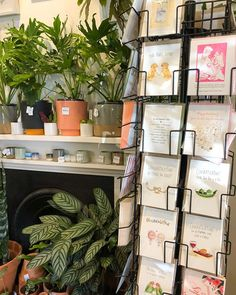 Hope you're all indoors on this rainy day! If you're in Yarraville drop into the plantastic @moseystore and see my cards. Finally landed my favourite local shop and proud to represent 3013! Hopefully a ferntastic partnership will blossom. Happy Saturday and don't forget to water your plants
