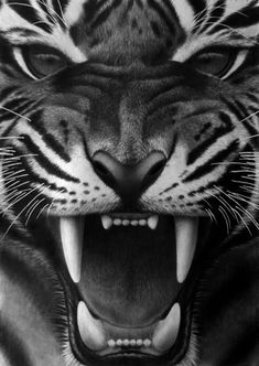 Fangs III, pencil by ~Panthera11  Traditional Art / Drawings / Animals  Snarling tiger