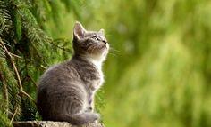 Ventajas del Césped Artificial para Gatos