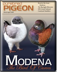 Purebred Pigeon Lahore Pigeon, Pigeons For Sale, Pigeon Breeds, King Pigeon, Fancy Chickens, Garden Stairs, Cute Cat Wallpaper, Grand National, Walking In Nature
