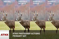 ATNX Photoshop Actions (Primary Set). Actions. $8.00