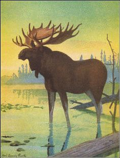 Burgess Books Colouring Art Sheets See More Elk The Largest Member Of Deer Family Thornton W