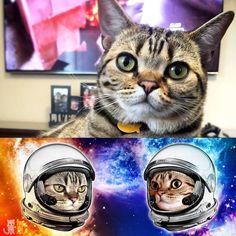 We made a custom mug for this cutie @mittensthekittens  #exoticshorthair #cat #cute #flatface #kitten #meow #pet #mreggs #catlover #exoticsofinstagram #smushface #weeklyfluff