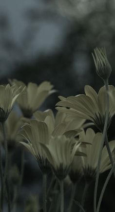 'Closing up for the night' by WestEndPhotography Close Up, My Photos, Night, Plants, Flora, Plant, Planting