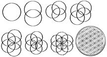 how to draw flowers | You can draw the Flower of Life yourself, using a high quality compass ...