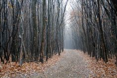 """1.) Hoia Baciu Forest (Romania): This forest is known as the """"Bermuda Triangle"""" of Romania. Multiple people have gone missing in it, people have sighted UFOs, there has been unexplained electrical phenomena and more."""