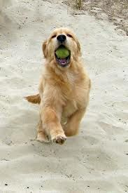I got the ball! I got the ball! I'm about to choke on it... but I got it!