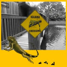 iguana on yellow Collage:   #beezmap