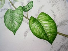 Lizzie Harper watercolour step 5 in painting a leaf