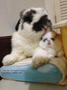 ❤️so sweet mummy abd baby bun