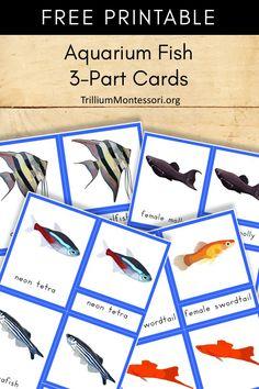 Free printable: Aquarium fish Montessori 3 part cards Montessori Preschool, Montessori Education, Free Preschool, Kids Education, Special Education, Petite Section, Montessori Practical Life, Pet Fish, Tot School