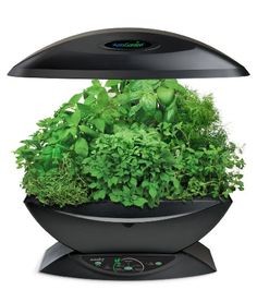 AeroGarden herb seed kit means fresh herbs for cooking all year round. I bet those in cold weather climates would love this for a winter holiday gift!