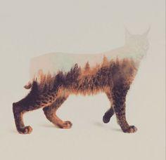 Animal Kingdom, Andreas Lie