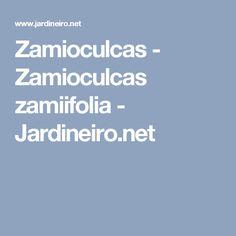 Zamioculcas - Zamioculcas zamiifolia - Jardineiro.net