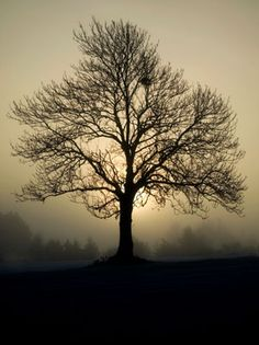 Tree photo by Tom Lloyd