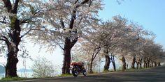 spring_2