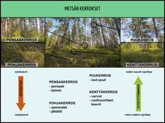 Metsän kerrokset. Science Art, Science And Nature, Tree Forest, Nature Crafts, Geography, Trees, Earth, Education, School