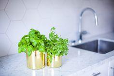 #kitchen #carrara #marble #carraramarble #brass #flowerpot #basil #thaibasil #hexagontiles
