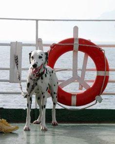 Pet friendly Cruise Line