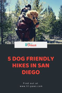 5 Dog Friendly Hiking Trails in San Diego. San Diego is home to countless hiking trails, however sadly, a big number of them do not allow you to bring your dog. We did some study as well as discovered some of the best places where you as well as your dog can adventure with each other! Proceed along to learn where you and also your fuzzy pal can hike. #dog #friendly #hike #sandiego #doghike #california #hiking #trails #summer #hikingtrails #pet #pettravel Places In California, California Travel, Hiking Dogs, Hiking Trails, Pet Travel Carrier, Travel Supplies, Dog Friends, Vacations, Your Dog