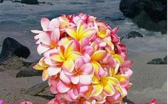 Plumeria. This vibrant and fragrant flower grows all over Hawaii,