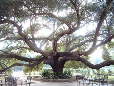 Vintage Court in Covington, LA (beautiful trees) My husband & I were married in Covington in 2007:))
