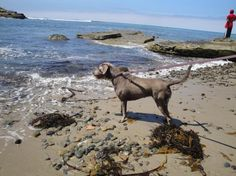 Cabrillo Tide Pools Trail (dog friendly hike in San Diego)