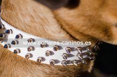 Collar de paseo para perros Cane Corso diseño original de pinchos en cuero blanco - S44W
