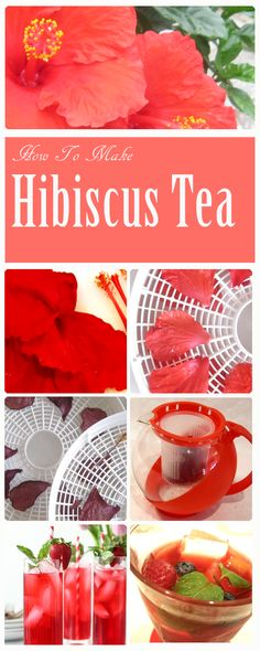 Hibiscus tea made from the common hibiscus shrub in your garden, Refreshing, healthgiving, delightful hot or cold! Hibiscus Shrub, Hibiscus Tea, Make It Simple, Tea Pots, Cold, Make It Yourself, Health, Garden, How To Make