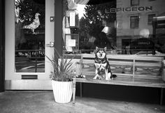 LePigeon      PreviousNext  click arrows to views photos    738 E Burnside St  Portland, OR 97214  (503) 546 - 8796