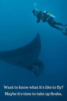 Scuba Quotes - Every wished you could fly? What about swimming with majestic Manta Rays? All this is waiting for you. Time to take up Scuba.